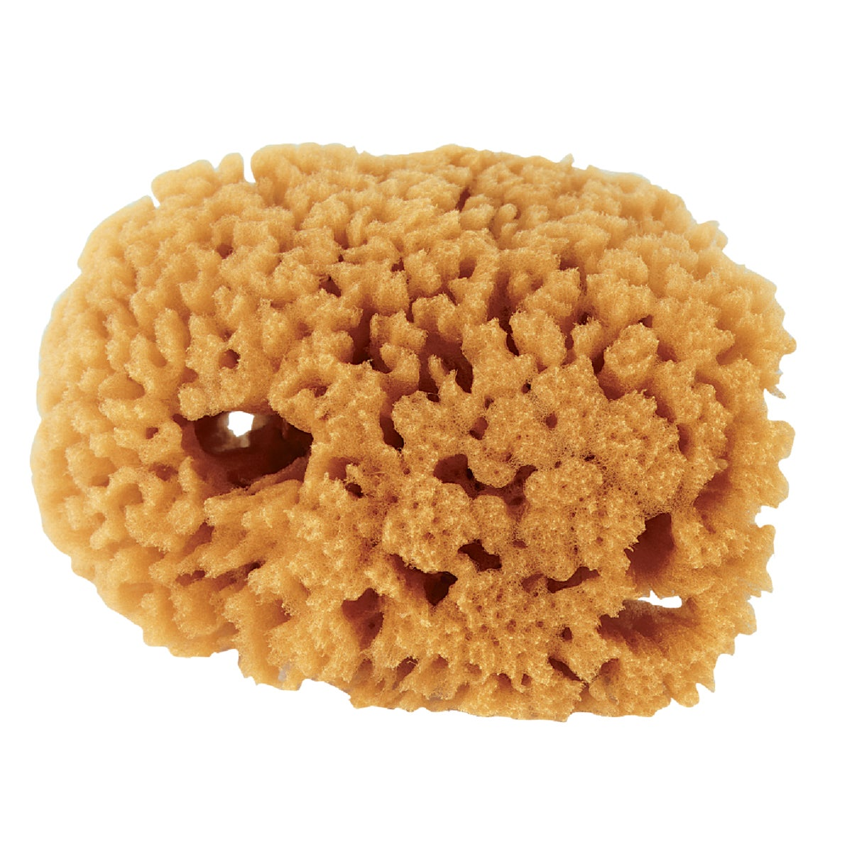 SMALL SEA SPONGE - 503192400 by Purdy Bestt Liebco
