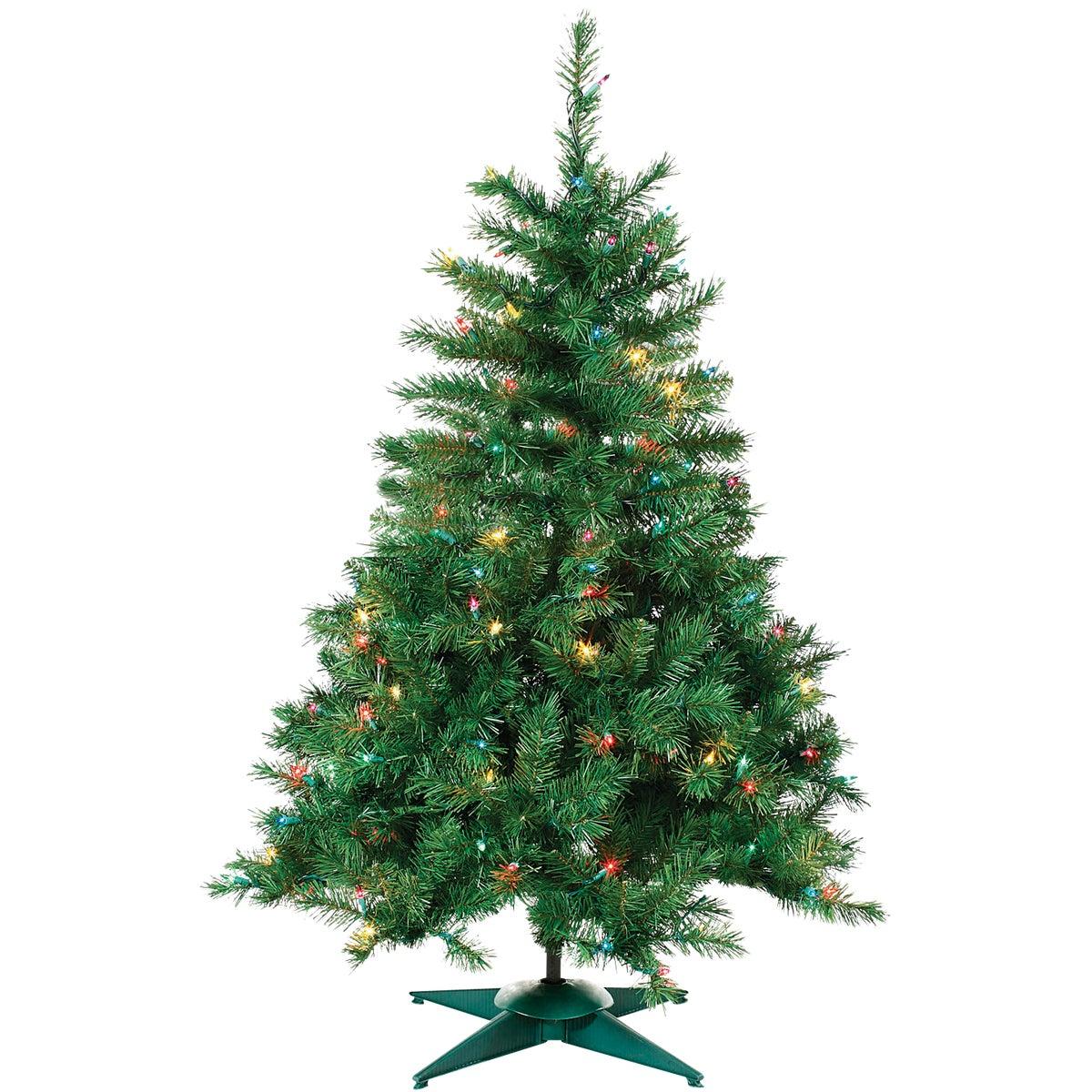 2'P/L COLRAD SPRUCE TREE